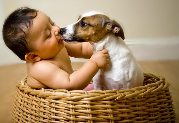 Niemowlaki i zwierzaki – toksoplazmoza i inne choroby, czy trzeba się bać?